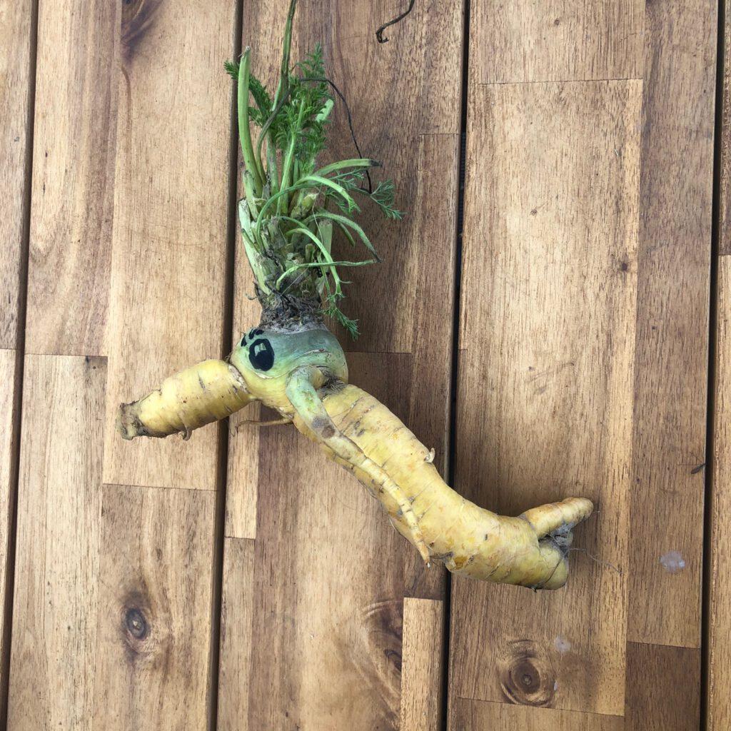Die Karotte blickt nach vorn